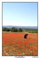 In a field of flowers... by NEOkeitaro