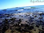 Oceanic View.