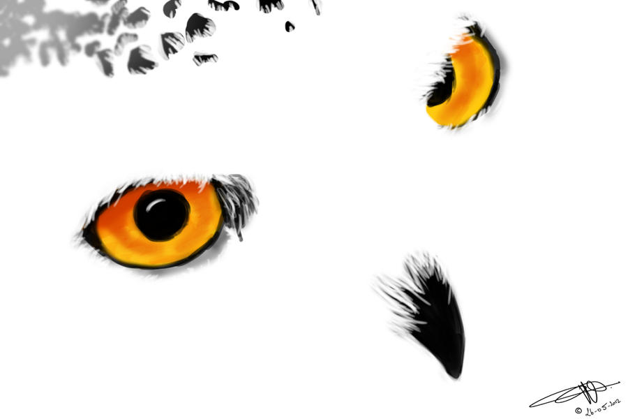 Take a look inside the eyes of an Owl by MushFX
