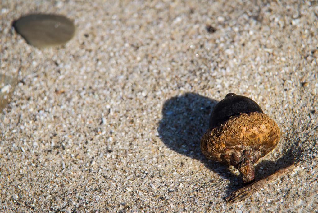 Beach Nut by 4everN3rdy