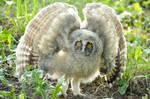 An Baby Owl v2
