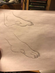 Foot with Dew Claw practice