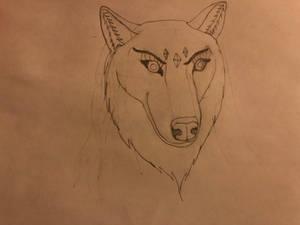 Siberian Husky/Great Plains Wolf Janice