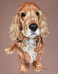 Cocker with soft pastel by Aleerakz