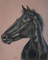 Nina - Black pony by Aleerakz