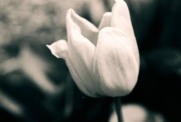 Spring Has Sprung by lilsmidget