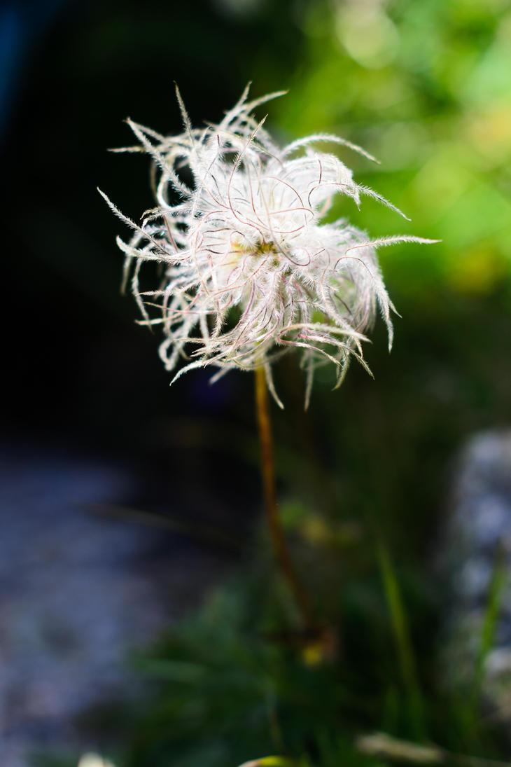 Fleur des montagnes by silk38