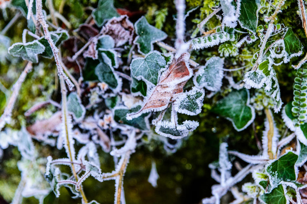 Winter memories by silk38
