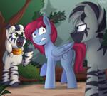 Getting to know Zebras