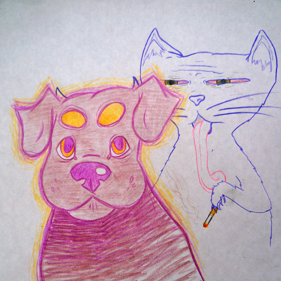 cat and dog by oij