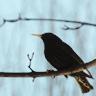 little bird by madeck