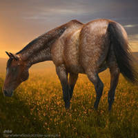 The Meadow by ClearwaterCustoms