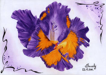 Violet by Saraty