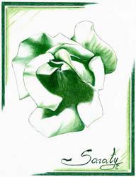 Green Rose by Saraty