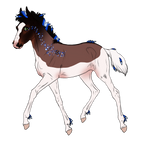 4626 Padro Foal Design
