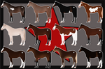 Red Star Stables - November Yearling Sale, CLOSED!