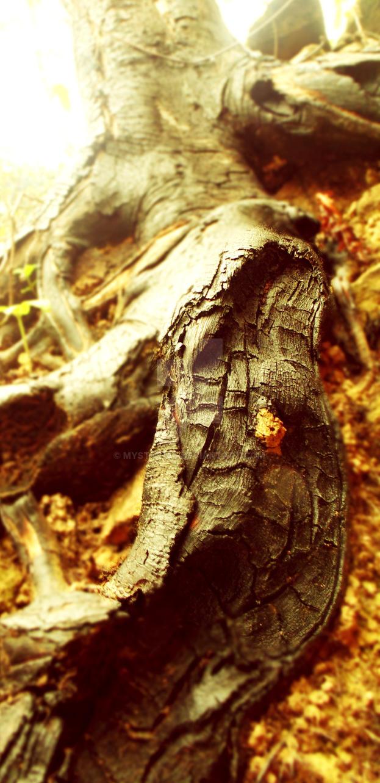 Tree trunk by mystichal