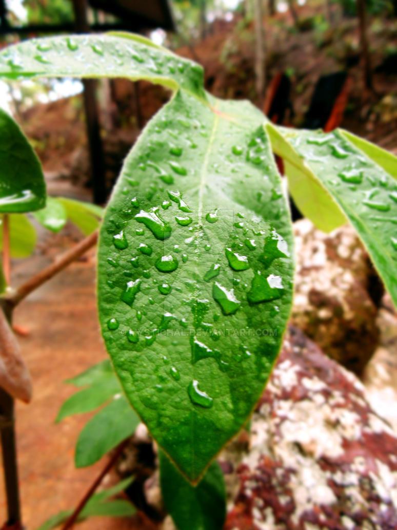 Drops on a leaf by mystichal