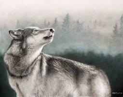 Wolf by mwford