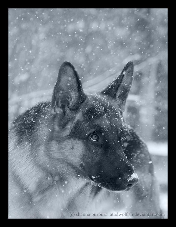 Polar Shepherd