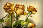 Although wilted roses are still beautiful. by Tracuss