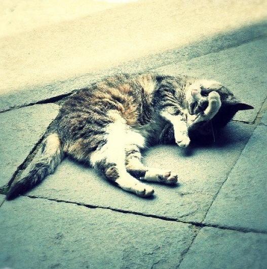 Cat by KaitoVIP
