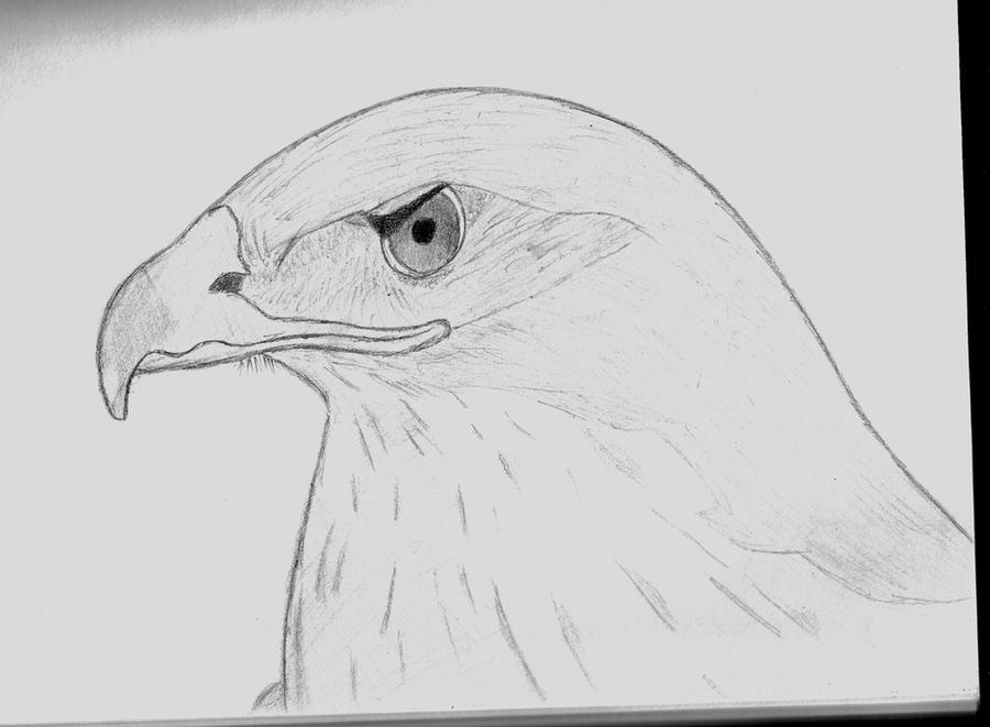 How To Draw A Simple Hawk