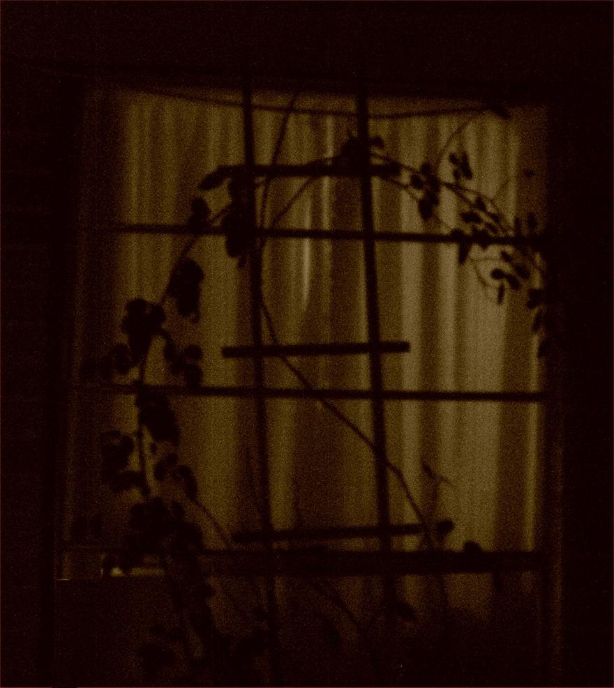 Night Window by tijir