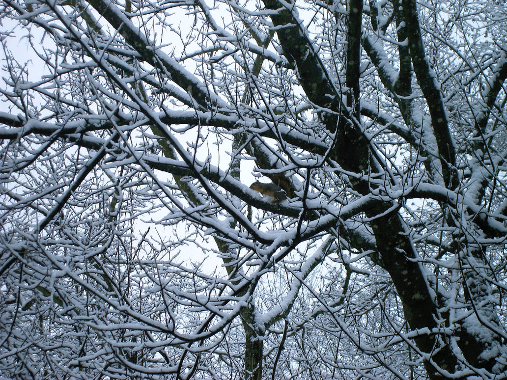 squirrell in snow by tijir