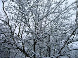 snowy tree by tijir