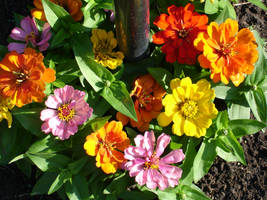 Mailbox Flowers by tijir