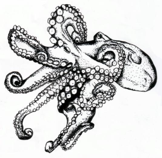 Octopus By Jschick ...