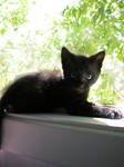 Baby Guen at the Window