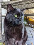 Miss Ebony on the Porch