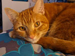 Pumpkin Spice Kitty