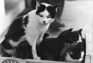 Brenus and her children