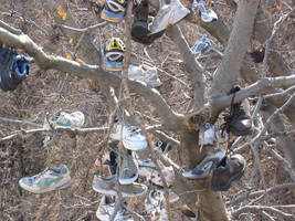 sci-stock - mighty shoe tree 5 by sci-fi-stock
