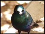 PwettyBird