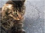 KittyCat1