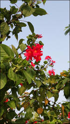 flower1 by Juniper85