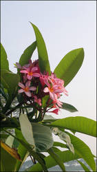 flower2 by Juniper85