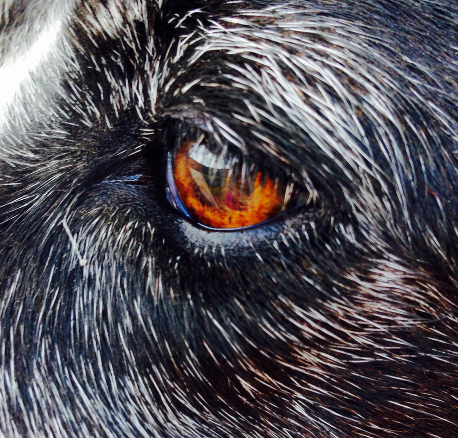 Eyes of Fire by mistyfoxheart