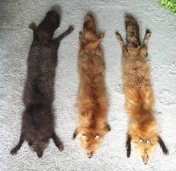 My Three Fox Stoles