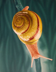 A Friendly Snail by kratos419