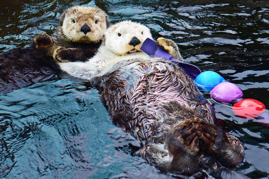 Sea Otters holding hands by koolguy