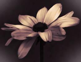 Daisy by listoman