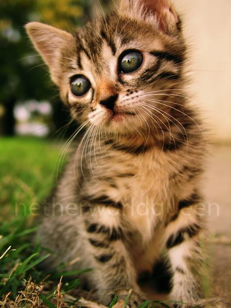 cute? by NetherworldQueen