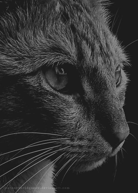 Cat Prince by NetherworldQueen