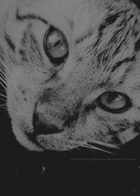 Little tiger by NetherworldQueen