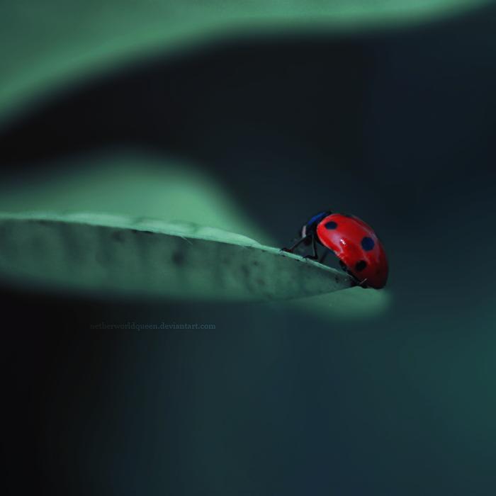 Crimson drop by NetherworldQueen